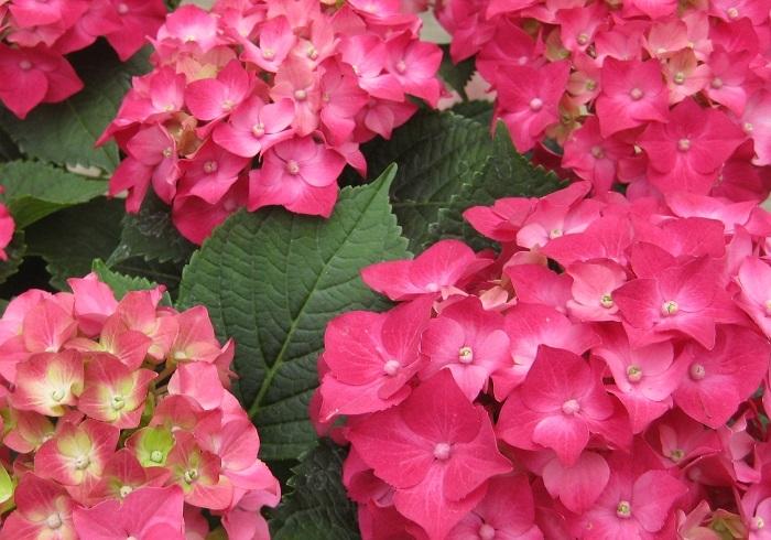 鉢植えの花は翌年以降もお庭で楽しむことができるので、ガーデニング好きのお母さんにおすすめですよ。