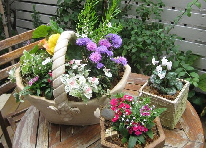 寄せ植えとは、ひとつの場所に複数の植物を植えることをいいます。育つ環境が似ている植物を組み合わせてプランターや庭などに植えることで、ひとつの風景をつくり出すことができます。