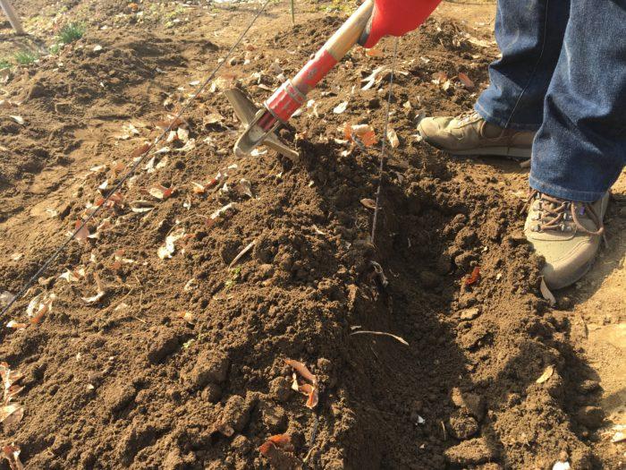 3.  畝の周りの土を鍬ですくい、畝の上にのせます。
