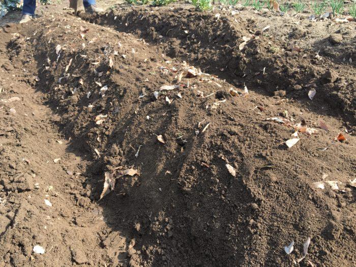 5.  畝の上にのせた土を少し丸みをもたせて成型します。(今回は丸みを帯びた高めの畝の形に成型しましたが、作物によって畝の高さや形は様々です。)