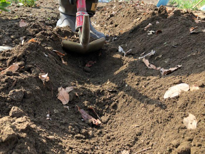 微生物の偏り  育てる作物が変わらないことにより、土中の微生物にも偏りができます。