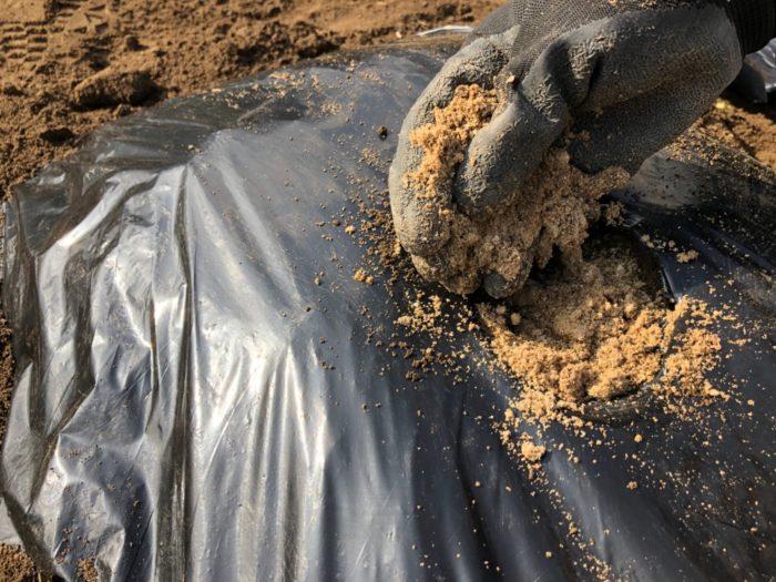 マルチの穴に米ぬかをかけることで、マルチと土のちょっとした接着代わりになってくれるようです。穴の開いた苗周りの雑草防止にもなりますのでお試しください。