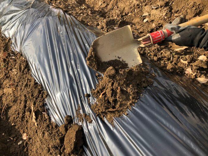 マルチが風で飛ばされないようにシンプルに土をのせるのも一つの方法です。