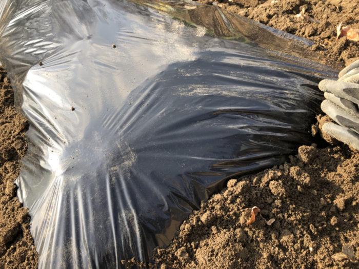 通常マルチというのはマルチタレントやマルチ商法など「複数の」をあらわす言葉として使われますが、農業におけるマルチとは「根を覆う」という意味で使われます。  マルチの効果 なぜ作物を育てる時にマルチをするのか?  じつはマルチをすることで6つの栽培におけるメリットが考えられます。  1. 病気の予防  雨が降り土壌の泥がはね返ることで作物の病気が発生します。マルチをすることで、雨が降った後の泥はねを予防することができるので、病気になりにくい環境を作ることができます。  2. 団粒構造の維持  「雨降って地固まる」の言葉にもたとえられるように、雨が始終叩きつけられる環境では地面が固まりやすくなります。何もしない状況よりもマルチをかけることで柔らかい土の状態を保つことができます。  3. 乾燥防止  プランター栽培と違い、畑で栽培する際の水やりはお天気に任せて栽培したいものですね。畝にマルチをすることで水分の蒸発を抑えることができるため水やりの手間をかなり省くことができます。  4. 地温の調整  マルチの色を使い分けることで光の反射や吸収を生かして、地温を調整することが可能です。  5. 雑草抑制  作物を育てる上で厄介な存在が雑草です。マルチの色を黒やシルバーにすることにより、光を遮り雑草の発生を抑えてくれます。  6. 害虫忌避  マルチの色をシルバーにすることで光を反射させます。この反射光を嫌うアブラムシなどの害虫を防ぐ効果があるといわれています。