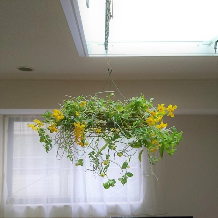 フライングリースとは、吊るして楽しむタイプのリースです。  リースならではの360度どこからでも楽しめるという特徴を活かして、リースを下から眺めるように飾ります。壁掛けとの違いは、背中を固定する必要がないので揺れるものや下垂するものなど、動きのある花材を楽しむことができます。