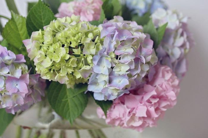 剪定したアジサイは切り花にして楽しむことができます。花瓶に生けたり、お皿に浮かべたり・・・アジサイは素敵な花あしらいができる花です。