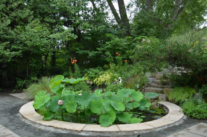 小さな池の周辺に広がる新緑が美しいこの庭は、風が吹くとウラジロハコヤナギの大木から囁くような葉音が聞こえます。