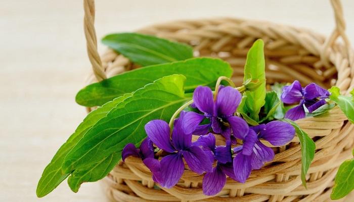 スミレ 菫 の花の魅力 色や種類 咲く季節 種の秘密まで Lovegreen ラブグリーン