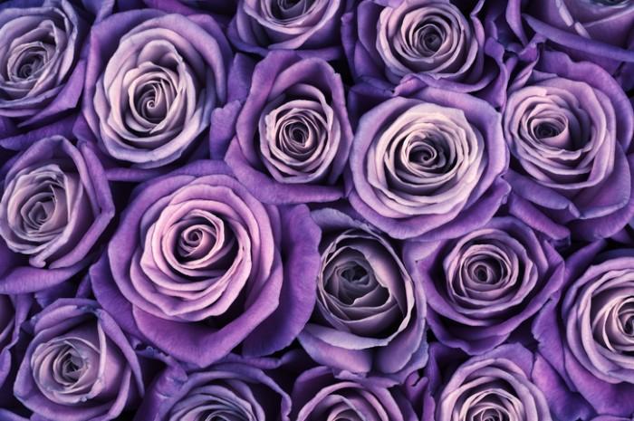 紫のバラの花言葉は、「誇り」「気品」「尊敬」です。ピンクは「感謝」「幸福」、白は「尊敬」というように色別に花言葉があります。