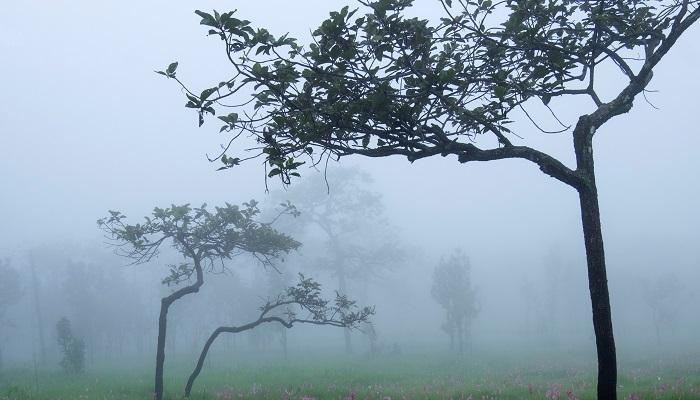 シンボルツリーとは、文字通りお庭のなかでシンボリックな存在感を放つ樹木を指します。お庭の中心や、一番目線が行く場所に植えることが常です。シンボルツリーを植えることでその場所がフォーカルポイントとなり、お庭全体の景観にまとまりが出ます。