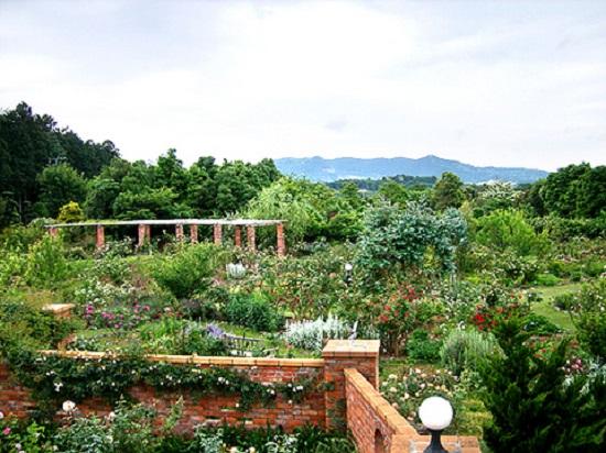ドリプレ・ローズガーデンは、千葉県君津市にある庭園です。一歩足を踏み入れれば、まるでイギリスの田舎に迷い込んだかのよう。ナチュラルなお庭に香りの強いバラだけを350種類・2,000株もコレクションされているそうで、バラのシーズンにはいい香りが楽しめます。この広くて趣のあるお庭が、なんと個人庭だというから驚きですよね。オーナーのせつさん夫婦が、開墾から始めて作り上げたお庭なんだそうです。
