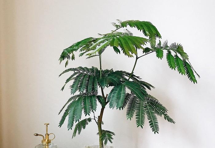 室内で植物を楽しみたい!インテリア好きなお母さんには、おうちに合う観葉植物を贈ってみるのもいいですね。