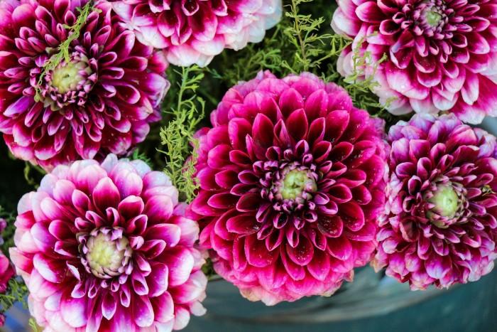 ふわっとして一輪だけでも存在感もあるダリアは、切り花でも鉢物でも人気のあるお花です。花言葉は「華麗」。