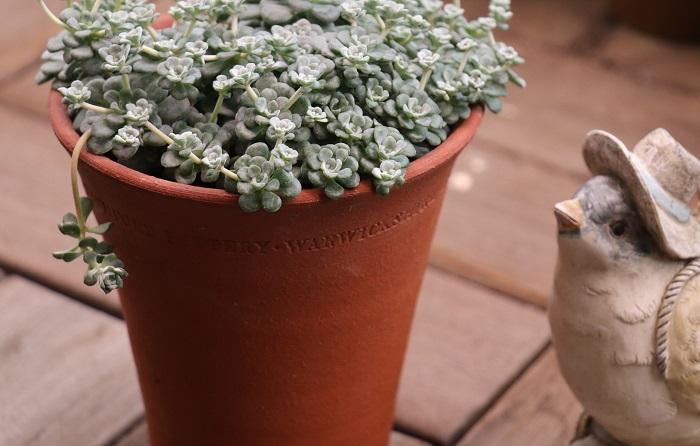 素焼きの鉢は通気性や排水性が良く、植物にとって快適な環境です。価格は安いものから高価なものまであります。自然素材で植物となじみやすく、使うにつれて味わいが出ます。デメリットは、凍るほどの寒さには弱く割れたりすること、保水性が悪く土が乾きやすいこと、重いことです。