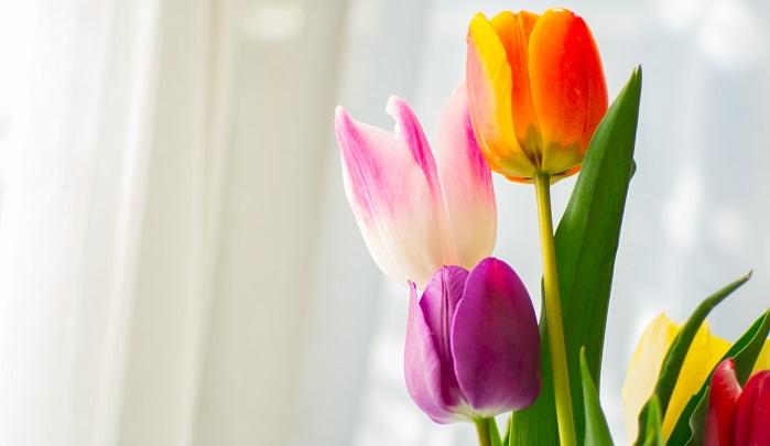 春に咲く花として多くの方がイメージするのがチューリップです。