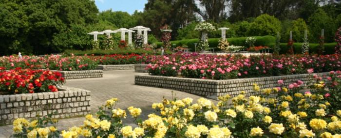 長居植物園のバラ園は約7,000㎡の広々としたヨーロッパ風の造りとなっています。お花を楽しみにきた方々により楽しんでもらえるよう、バラの配置や色彩にもこだわり配置されています。バラのテラスからの眺めは、美しいバラの広がりと開放感を同時に感じることができます。バラの開花時期は4月下旬~5月下旬、10月中旬~11月下旬の年に2回です。