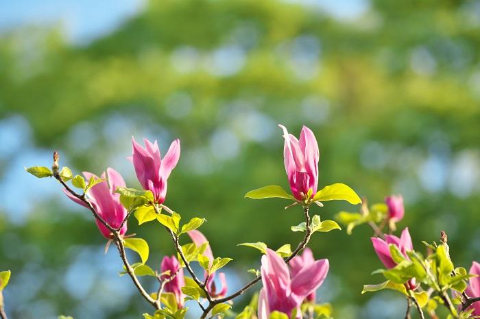 シンボルツリーが花を咲かせ、その花を見て一年の繰り返しを思い出すのは素敵なことです。花は四季を感じさせる大きな要素になります。やっぱりお花を楽しみたいというお庭におすすめです
