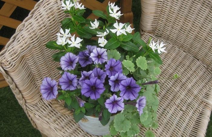 メインのお花、わき役の小花、カラーリーフなどの、育つ環境が似ている3ポットを組み合わせると簡単に寄せ植えが作れます。