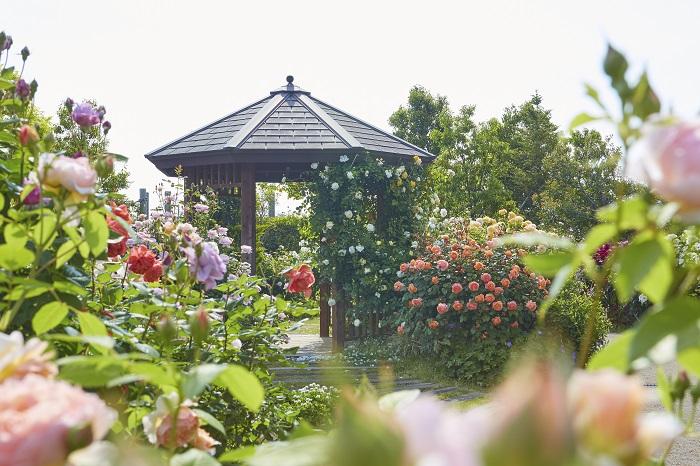 家族でゆっくりした時間を過ごしたい方におすすめしたいスポットが、花菜ガーデン。この名前は一般公募で決められた愛称で、正式には神奈川県立花と緑のふれあいセンターといいます。