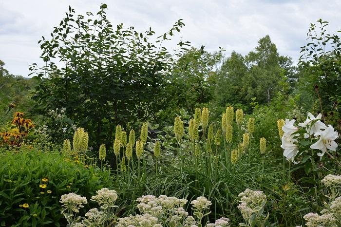 触れたり、香りをかいだりなど五感で楽しめるようにデザインされた庭です。色、香り、形、不思議な手ざわりなど個性的な特徴を持つ植物が多数植栽することにより、花に興味を持ち、もっと身近に感じてほしいそんな願いをこめて作られました。