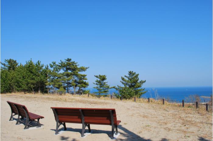 海も眺めることができます。 国営ひたち海浜公園では豊かな花々や草木はもちろんのこと、ご家族で楽しめる施設が充実しているので、大切な人とゆったりと過ごしたい方へおすすめです!