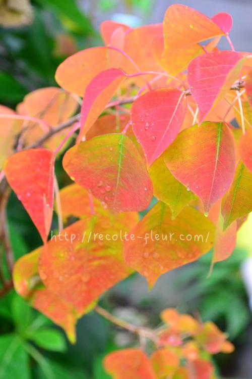 チューリップの球根の植え付け時期は、地域によって差がありますが、目安としては「紅葉の見ごろ」を目安にするとよいでしょう。  遅くても年内には球根の植え付けを完了します。チューリップは、球根を植え付けてから寒さを経験することによって花芽が形成されます。的確な時期にチューリップの球根を植え付け、生長のための期間を作ってあげましょう。