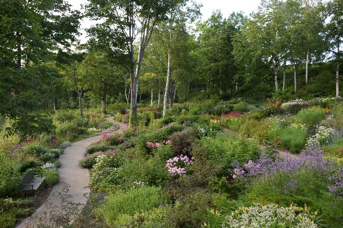 雄大な大雪山連邦が間近に感じられる大雪 森のガーデンは、庭ができるずっと前からこの地に根付いていたさまざまな樹木もあり、私たちを心の奥から浄化してくれます。  この大雪 森のガーデンは、野趣あふれる植栽が彩り豊かに咲き変わる「森の花園」と、ダケカンバなどの自然の樹木や山野草に癒される「森の迎賓館」という趣の異なる二つの庭から構成されたガーデンです。  標高が約650mということもあり、北海道の平野部よりも少し遅れて巡ってくる季節に、約1,000品種の宿根草がリレーのように開花し、様々な表情を見せてくれる魅力的なガーデンです。