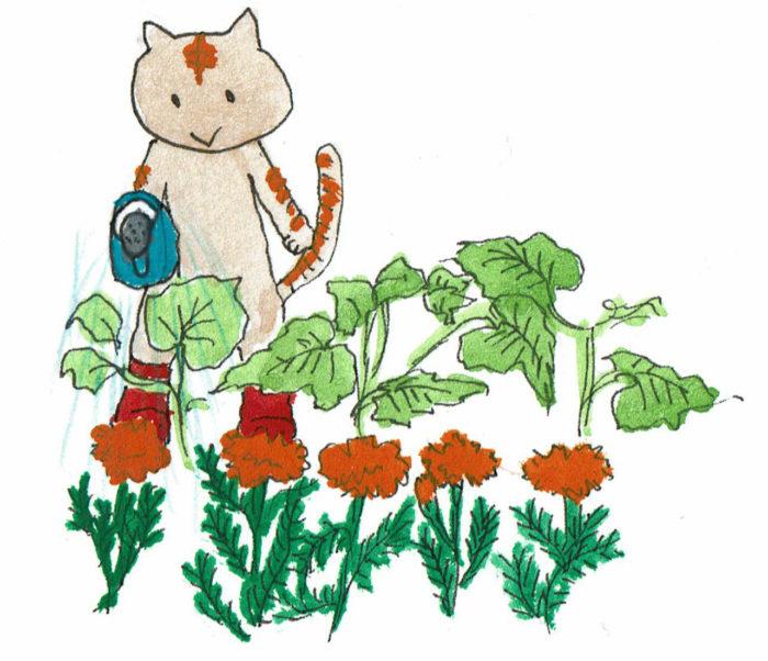 コンパニオンプランツとして有用なマリーゴールドも、花が咲いてはオオタバコガの幼虫などが寄ってくるので、花が咲いたらつみ取って部屋に飾りましょう。  オーガニックな種から育てると、マリーゴールドの花もエディブルフラワーとして食べることができます。また、「エバーグリーン」といって花の咲かないマリーゴールドの品種もありますよ。