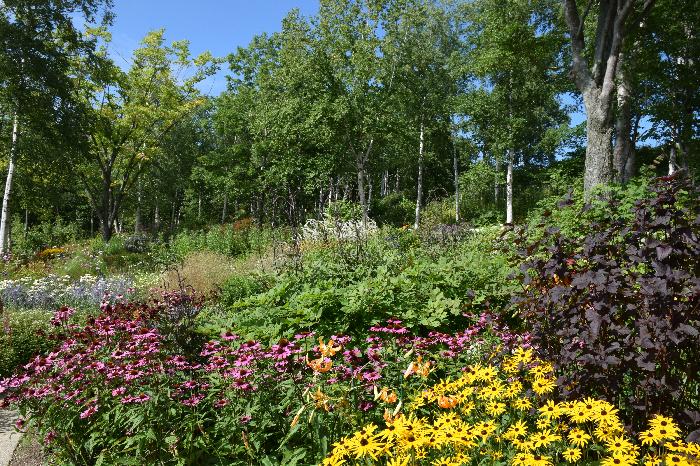ダイナミックな大型植物や、穏やかに揺れるグラス類、ハーブや野草などの多様な植物で構成されています。 5つのテーマガーデンの中で最も広いスペースで、北海道らしいのびのびとした「神々が遊ぶ庭」を表現しています。  ※カムイミンタラ…アイヌ語の豊かな自然に恵まれた大雪山連峰をあらわす言葉で「神々の遊ぶ庭」を意味します。