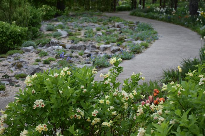 上川を象徴する「大雪山系の植物を大切にしたい」という想いを込めて作られたガーデンです。  この大切な庭には、大雪山で見られる高山植物や北海道の自生種が植えられています。  観光客はもちろん、地元の人にも「身近な植物に親しんでもらいたい」そんな想いが込められたガーデンなんです。