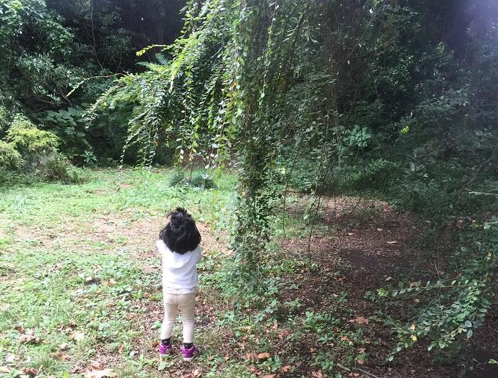 森で森林浴がしたいけれど時間も余裕もない!そんなときは近所の公園や植物園に行ってみませんか?  近所の公園に行くときも、植物にフォーカスをあわせてみると、いつもと違う気分が味わえるかもしれません。