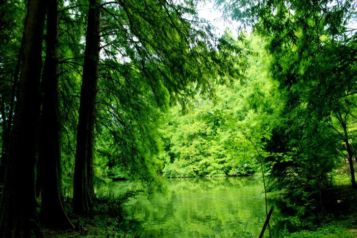 生きた化石といわれるメタセコイアや、巨木樹として知られるセコイア(第三紀植物群)、アケボノゾウが生きていたころの明石植物群、1万年~200万年前の大阪の原生林、照葉樹林、二次林など、大阪の樹木を時代別に、その代表種によって再現しています。