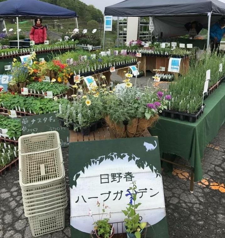 八ヶ岳南麓にある日野春ハーブガーデンさん。いろいろな種類のハーブが元気な株で揃っています。