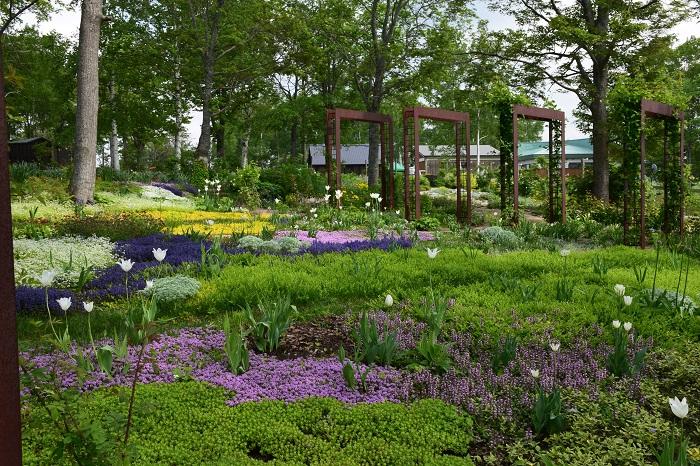 グランドカバープランツが所狭しと広がる、まるで地面から泉が湧きあがるようなイメージを表現した庭です。  アジュガやタイム、リシマキアなどが花の絨毯のように広がる中から、アリウムがスラリと伸びてポール状の花をのぞかせます。