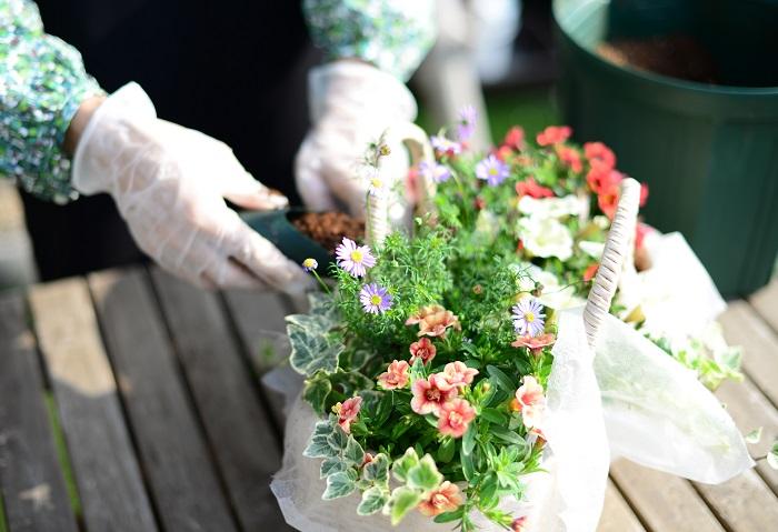 苗と苗の隙間に、手前から後ろ側まで1周土を入れていきます。指で土をつっつきながらしっかりと入れましょう。