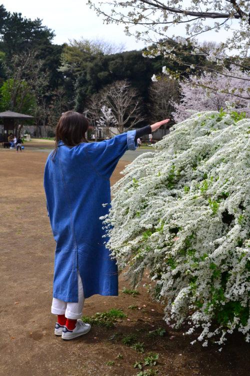 雪柳は低木ですが、放任で自然に伸ばしていくと2m近くの丈になります。丈と同じく、横幅も2m近くなるので、隣との植物との間隔は、植え付け時から広めにとったほうが無難です。