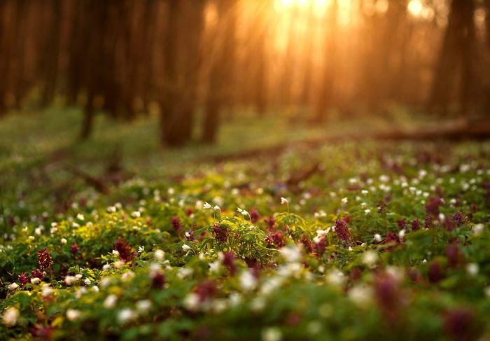 日当たりが悪いと何を植えても育たない、とあきらめがちですよね。植えても植えても花が咲かない、育たない、なんて気が付いたら放置しっぱなしで寂しいお庭になっていませんか。日陰には日陰の風情と楽しみ方があるんですよ。  午前中は日が当たるけど午後は当たらない日陰、建物に遮られて雨も降りこまないような乾燥した日陰、日陰にもいろんな種類があります。日陰の種類によって育てられる植物も変わってきます。  まずは日陰の種類を見極めましょう