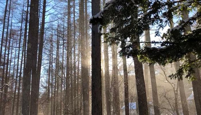 冬なら枝の上に積もった雪がぱあっと散るように落ちてくるところが見れたりします。キラキラ宝石が降ってくるみたい。