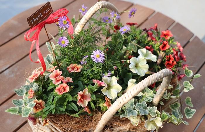 ピックを挿してもいいですね。下から流れ出るくらいたっぷり水をあげましょう。水やりの際、できたら花にではなく、株の根元に水をあげると花が長持ちします。