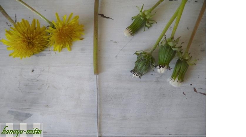 それでは、採取してきたタンポポの綿毛を可愛く開かせるために下処理をしましょう。  ワイヤーを仕込む 綿毛の茎に#18~22のワイヤーを仕込みます。タンポポの茎の中は空洞になっているので、水分が落ちてハリが無くなるとくにゃくにゃになって途中で折れてしまいます。  綿毛を開かせたらすぐに吊るして飾るのであれば必要ないかもしれませんが、このワイヤーを仕込むひと手間で綿毛の頭がしゃっきりと上を向きます。