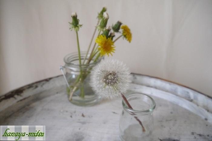 採取してきた綿毛の蕾にワイヤーを仕込み、花瓶などに入れて一晩置きます。早ければ翌朝、遅くても2日ほどでまんまるふわふわな綿毛が開きます。