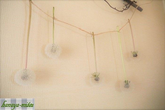 タンポポの綿毛のドライフラワーが出来たら、麻紐などに結びつけて上から吊るします。柔らかい綿毛のガーランドです。なんだかちょっとほんわかしますよね。