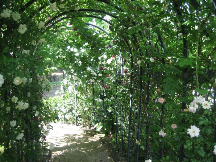 「幸せを心に、香りとともに」をテーマに香りのよい植物が植栽されたゾーンです。こちらのエリアでは、クチナシやキンモクセイ、ニオイスミレや、ハーブなどが植えられています。五感いっぱいで感じる花々が私たちを歓迎してくれます。見ごろは見頃1月~10月です。