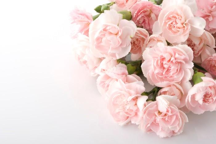 世界で古くから栽培されている花カーネーション。キリスト教文化では、聖母マリアがイエス・キリストのために流した涙から地上に生まれたと信じられています。  カーネーションは色別に花言葉を持っています。ピンク色のカーネーションは、「感謝の心」「温かな愛情」。白色のカーネーションの花言葉は「純粋な愛」。