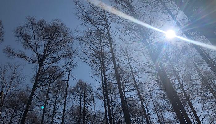 また、風で枝葉の揺れる音が1/fゆらぎ(えふぶんのいちゆらぎ)であることが確認されており、人間の心拍やロウソクのゆらぎなどと同じようなリズムのため、風で枝葉の揺れる音を聞くことで脳波がα波になり、リラックスすることができると言われています。