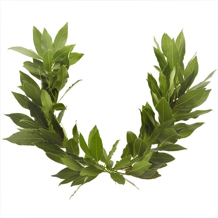 月桂樹の葉はハーブとして有名です。その光沢のある深いグリーンの葉は、世界中で料理に使われています。月桂樹の葉は料理以外にも栄光の象徴として有名です。  月桂冠とは 古代ギリシアでは、月桂樹の葉で作られた冠は知恵と栄光の象徴として用いられました。月桂樹はギリシア神話では太陽神であり芸術の神であるアポロンに捧げられた樹です。よって月桂冠は優れた芸術家に与えられたものでした。これがのちにオリンピックの勝者へ与えられるようになった由来です。  古代ローマでは戦いで勝利をおさめた英雄たちに、栄光の象徴として月桂冠が与えられたと言います。