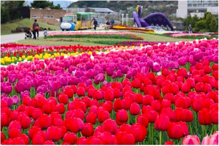 一年で最も草花が美しい時期に、淡路島全体で行われる花のイベント。期間中に、島内にある花の施設ではチューリップ、アイスランドポピー、ネモフィラ、バラなどが次々見ごろを迎えるので、心地よいひとときをお過ごしください。「お絵かき花壇づくりコンテスト」の作品展示や「人・花フォトコンテスト」の作品募集、「花物語クイズラリー」など、多数イベントも実施します。