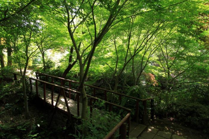 園内を見渡せるように整備された長さ約500mの散策路です。
