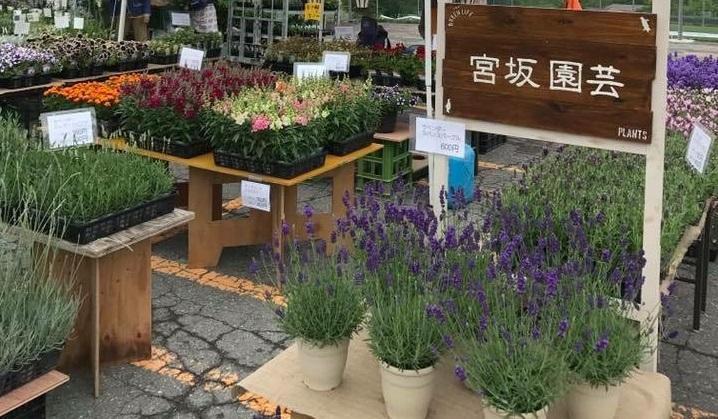 諏訪郡原村の標高1050mのところにある宮坂園芸さんはハーブや一年草・多年草の鉢物を扱っています。