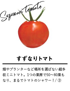 すずなりトマト